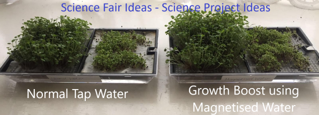 Applications: science fair ideas, science project ideas, science fair projects for high school, plant experiments, how plants grow, easy science fair projects, good science fair projects, science fair experiments, science fair topics, science fair ideas for 8th graders, high school science projects, science fair questions, science fair projects ideas for 8th grade, school project ideas, science fair project ideas, magnetic water treatment, good science fair ideas, science fair projects for high school working model, science expo ideas, plant magnets, science fair model, science fair projects for high school working model, science exhibition ideas, science exhibition project, growing plants with magnets, the effect of magnets on plant growth project, science project magnetic field and plant growth